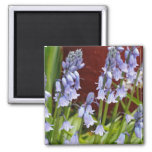 Bellflowers in Front of a Red Wall Magnets