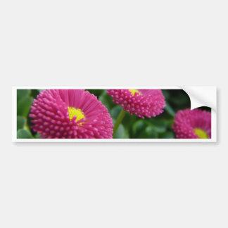 Bellis perennis Pomponette English Daisies Bumper Sticker