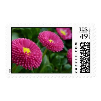 Bellis perennis Pomponette English Daisies Postage Stamp