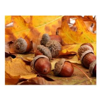 Bellotas de Brown en las hojas de otoño, cierre Postales