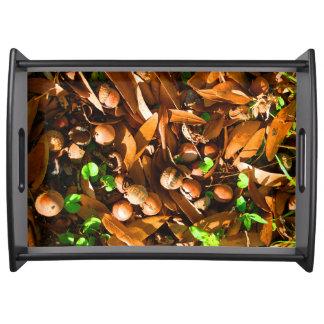 Bellotas y hojas del roble - bandeja de la porción