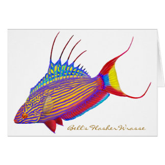 Bell's Flasher Wrasse Reef Fish Card