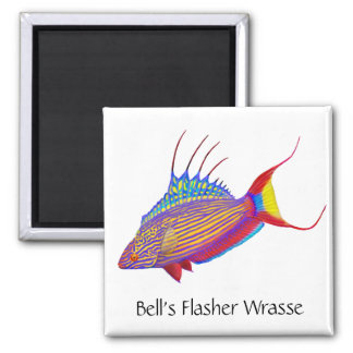 Bells Flasher Wrasse Reef Fish Magnet