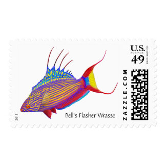 Bell's Flasher Wrasse Reef Fish Postage
