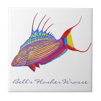 Bell's Flasher Wrasse Reef Fish Tile