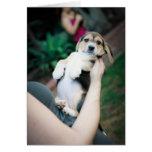 Belly del beagle del bebé tarjeta