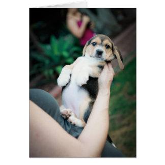 Belly del beagle del bebé tarjeta de felicitación