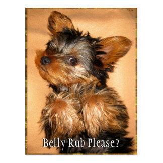 Belly Rub for a Yorkie? Postcard