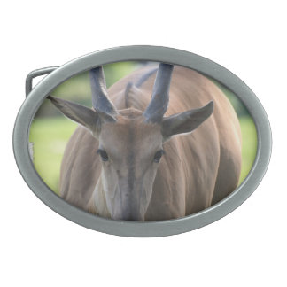 belt buckle - Customized