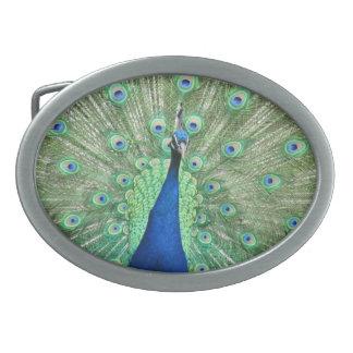 Belt Buckle - Peacock