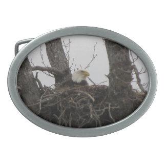 Beltbuckle de Alaska Eagles Hebillas De Cinturón Ovales
