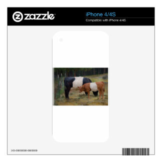 Belted cow and calf with texture iPhone 4 decals