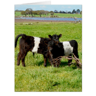 Belted_Galloway_Calves_In_Field_Big_Greeting_Card. Card
