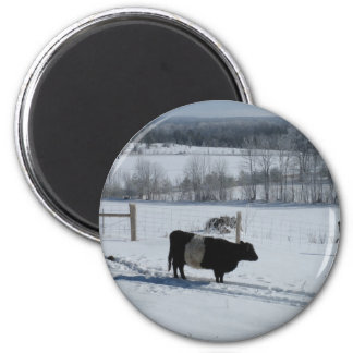 Belted Galloway Cow in a Snowy Landscape 2 Inch Round Magnet