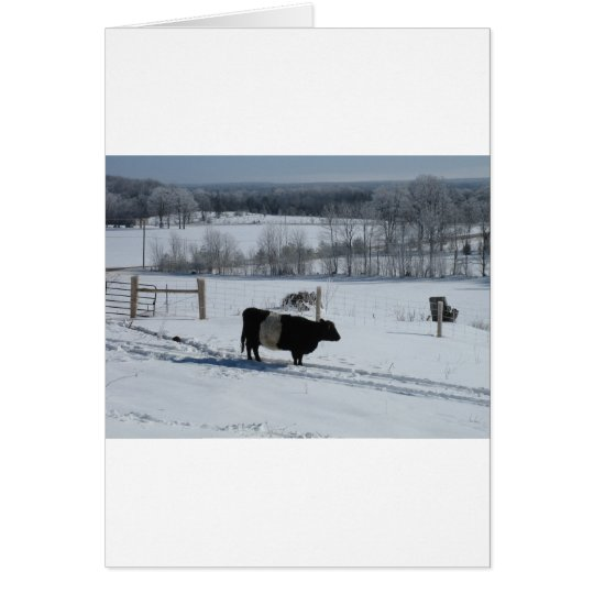 Belted Galloway Cow in a Snowy Landscape Card