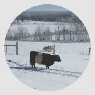 Belted Galloway Cow in a Snowy Landscape Classic Round Sticker