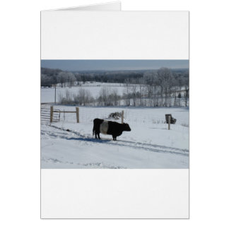 Belted Galloway Cow in a Snowy Landscape Greeting Card