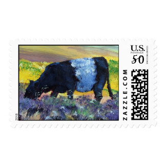 Belted Galloway Cow on Dartmoor Postage