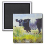 Belted Galloway Cow Painting Fridge Magnet