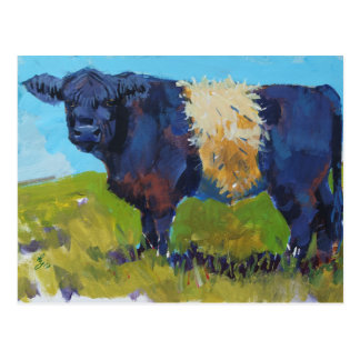 Belted Galloway Cow painting Postcard