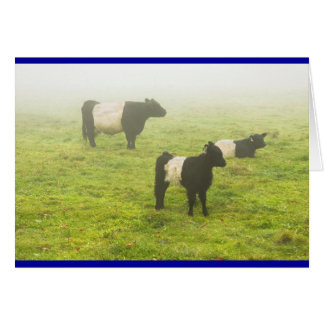 Belted Galloway Cows Grazing In foggy Farm Field Card