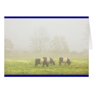 Belted Galloway Cows Grazing On foggy Farm Field Card