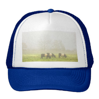 Belted Galloway Cows Grazing On foggy Farm Field Mesh Hat