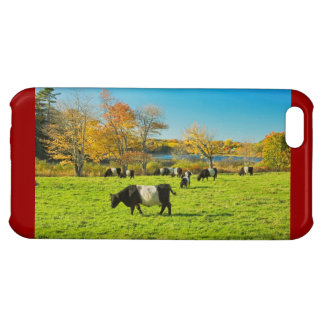 Belted Galloway Cows Grazing On Grass In Fall Case For iPhone 5C