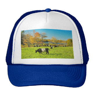 Belted Galloway Cows Grazing On Grass In Fall Mesh Hat