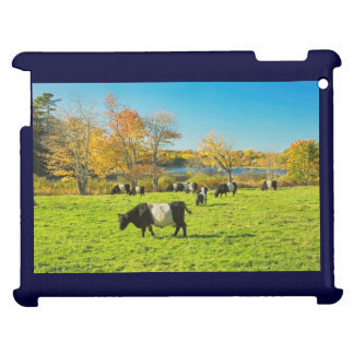 Belted Galloway Cows Grazing On Grass In Fall iPad Cover