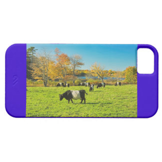 Belted Galloway Cows Grazing On Grass In Fall iPhone SE/5/5s Case