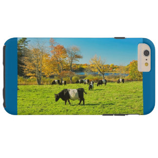 Belted Galloway Cows Grazing On Grass In Fall Tough iPhone 6 Plus Case