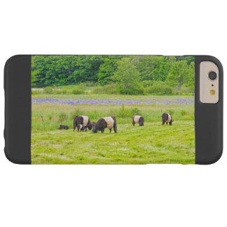 Belted Galloway Cows in Pasture Rockport Maine Barely There iPhone 6 Plus Case