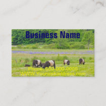 Belted Galloway Cows in Pasture Rockport Maine Business Card