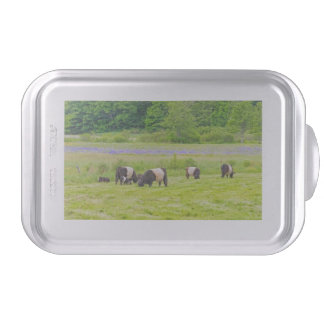Belted Galloway Cows in Pasture Rockport Maine Cake Pan