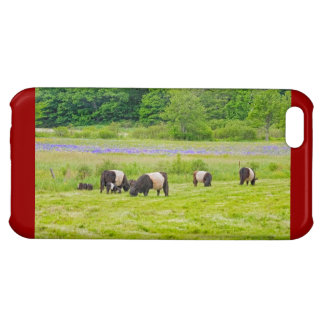 Belted Galloway Cows in Pasture Rockport Maine Cover For iPhone 5C