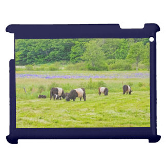 Belted Galloway Cows in Pasture Rockport Maine Cover For The iPad