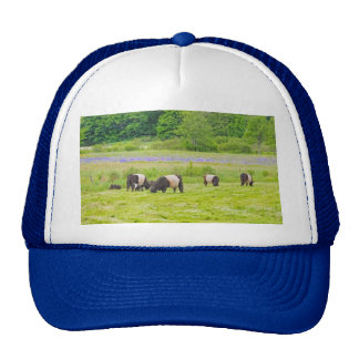 Belted Galloway Cows in Pasture Rockport Maine Trucker Hats