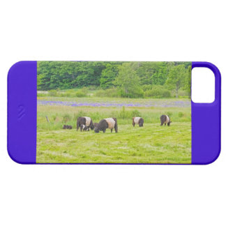 Belted Galloway Cows in Pasture Rockport Maine iPhone SE/5/5s Case