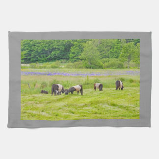 Belted Galloway Cows in Pasture Rockport Maine Kitchen Towel
