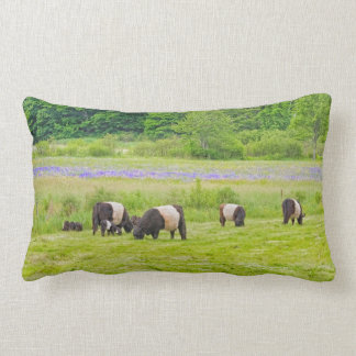 Belted Galloway Cows in Pasture Rockport Maine Lumbar Pillow