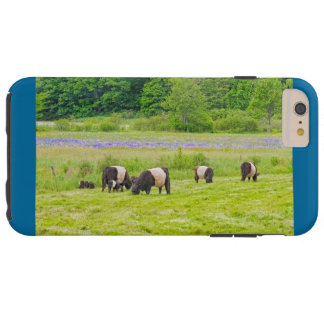 Belted Galloway Cows in Pasture Rockport Maine Tough iPhone 6 Plus Case