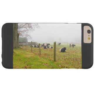 Belted Galloway Cows in Rockport Maine Barely There iPhone 6 Plus Case