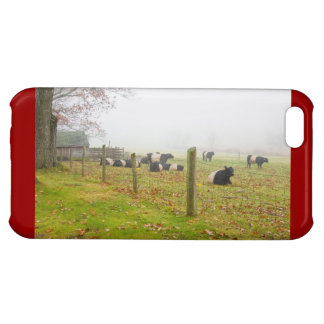 Belted Galloway Cows in Rockport Maine Case For iPhone 5C