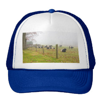 Belted Galloway Cows in Rockport Maine Trucker Hats