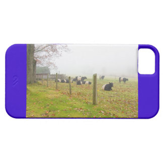 Belted Galloway Cows in Rockport Maine iPhone SE/5/5s Case