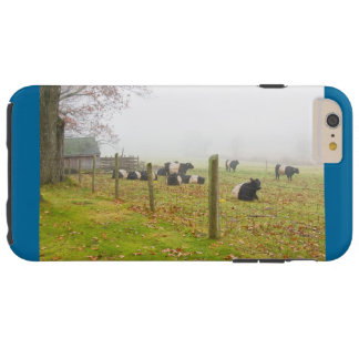 Belted Galloway Cows in Rockport Maine Tough iPhone 6 Plus Case