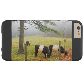 Belted Galloway Cows On Farm In Rockport Maine Barely There iPhone 6 Plus Case