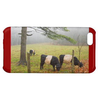 Belted Galloway Cows On Farm In Rockport Maine Case For iPhone 5C