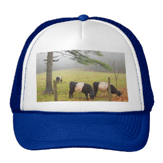 Belted Galloway Cows On Farm In Rockport Maine Mesh Hat